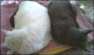 Cats in the Gap (A Memorial Essay)